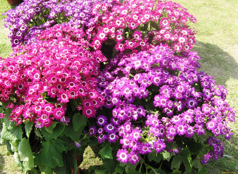 Картинки гибридных цветов